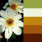 Free palette