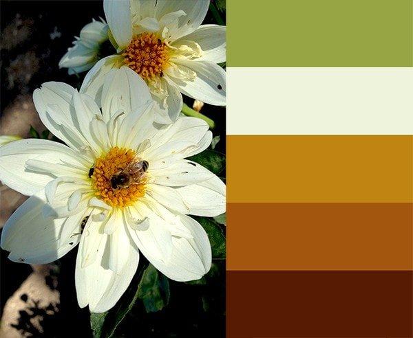 Color Development and Harmonizing